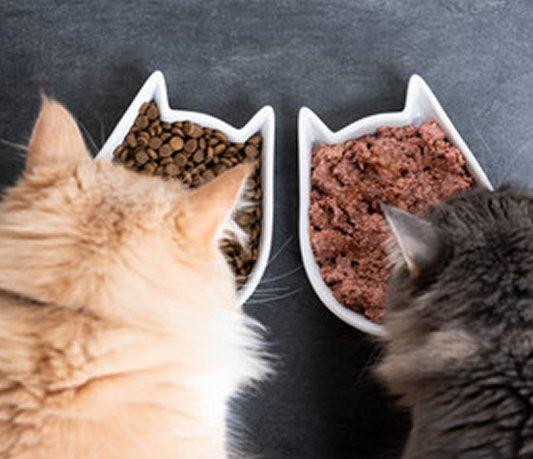 feed pets outside
