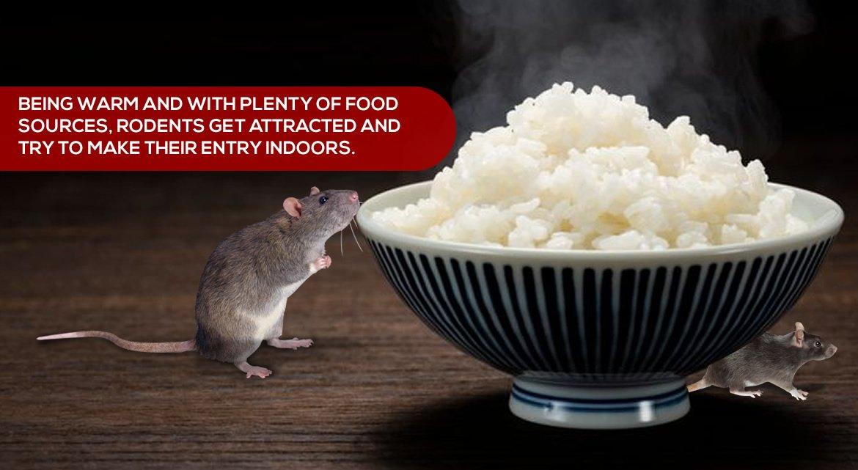 rat prevention tips