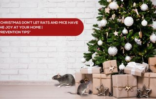 rat prevention tips for Christmas