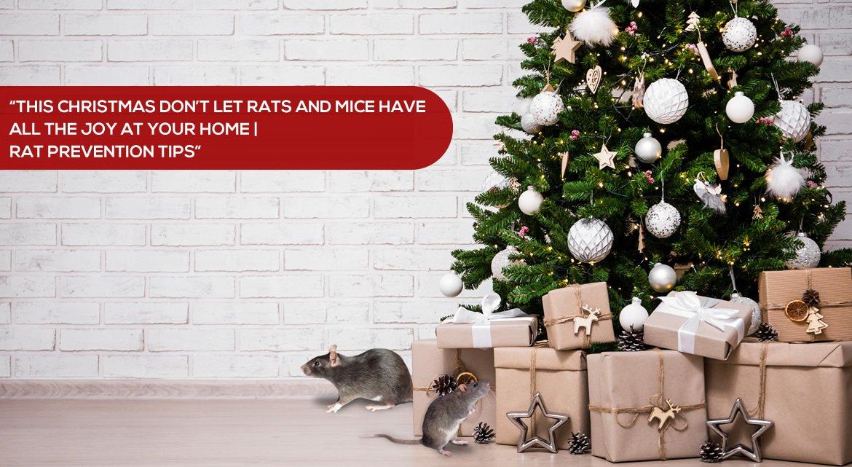 rat prevention tips for Christmas